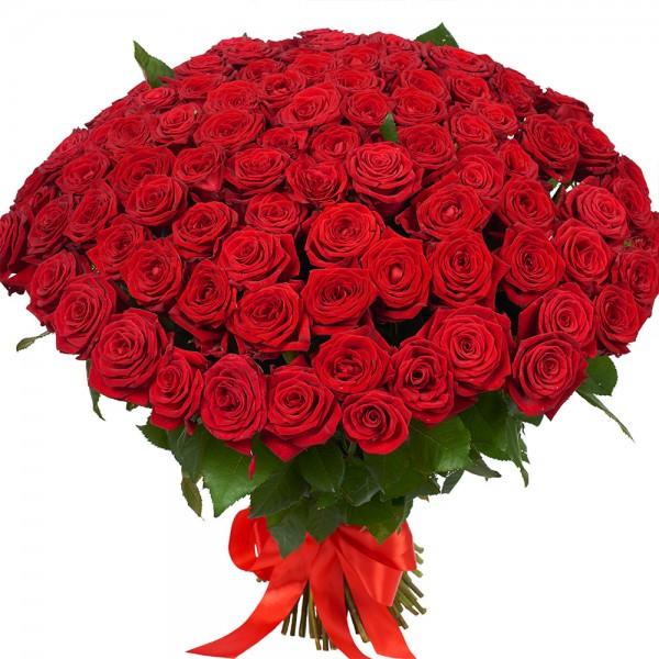 101 красная роза выотой 80 см.